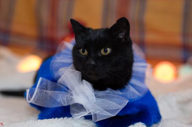 Кошка Наоми.